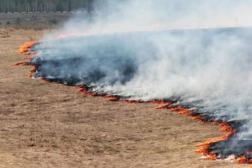 С начала летнего сезона в Калмыкии зарегистрировано 125 пожаров