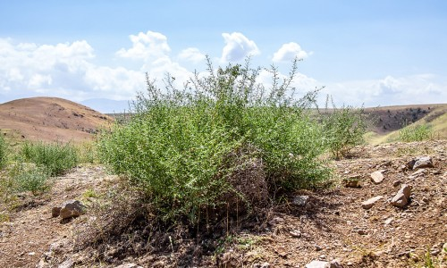 Сегодня день борьбы с опустыниванием и засухой