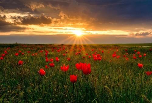 В это воскресенье мы отметим самый молодой праздник – День республики Калмыкия