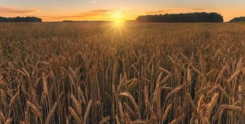 Сложившиеся погодные условия вызывают опасения у хлеборобов