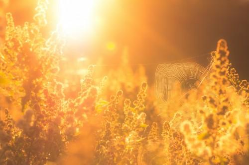 В Калмыкии ожидается сильная жара