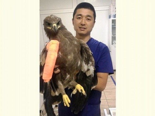 Ветеринары Калмыкии провели операцию по спасению необычного пациента