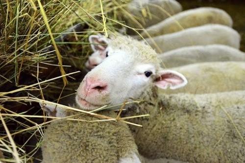 Засуха в Калмыкии повлияла на прокорм скота