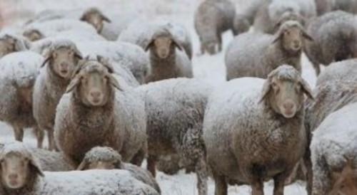 Зимовка поголовья в этом году проходит в непростых условиях