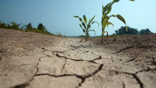 Осталось три дня до окончания приема документов от аграриев, пострадавших в результате засухи