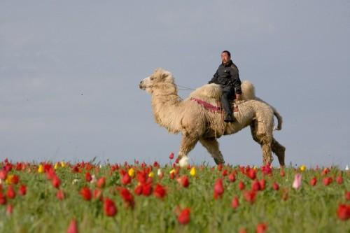 Калмыкия вошла в пятерку самых привлекательных для гастрономического туризма регионов