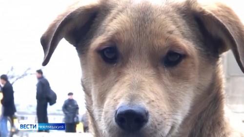 В Элисте откроется приют для бездомных животных