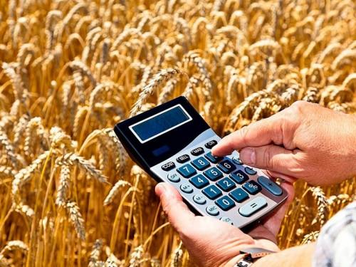 Начался прием документов от аграриев региона для предоставления субсидий из ресбюджета