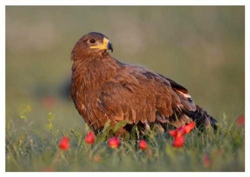 Проект  заповедника «Черные земли» получит финансирование от Всемирного фонда дикой природы