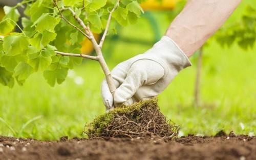 План посадки деревьев в рамках эколого-патриотической акции «Сад памяти» в Калмыкии выполнен