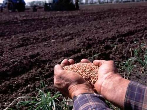 В хозяйствах Городовиковского района завершаются полевые работы