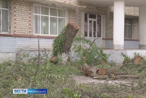 Уголовное преследование грозит директору «Горзеленхоза»