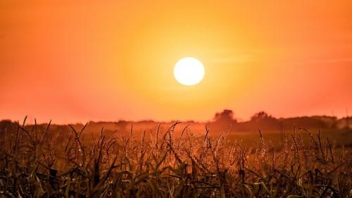 Аномальная жара в Калмыкии с превышением климатической нормы по температуре воздуха на сохранится до 22 июля