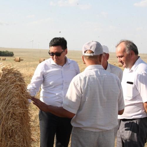 Заготовка кормов и уборка зерновых в Целинном районе в самом разгаре