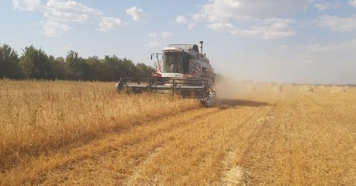 В хозяйствах Малодербетовского района завершена хлебоуборочная кампания