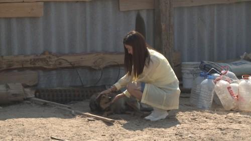 Волонтеры Калмыкии оказали содействие в благоустройстве питомника для бездомных собак в одном из частных дворов
