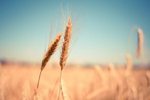 Хлеборобы Яшалтинского района готовятся к предстоящему севу озимых
