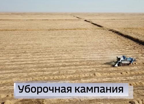 Уборка риса в хозяйствах Октябрьского района началась на две недели позже