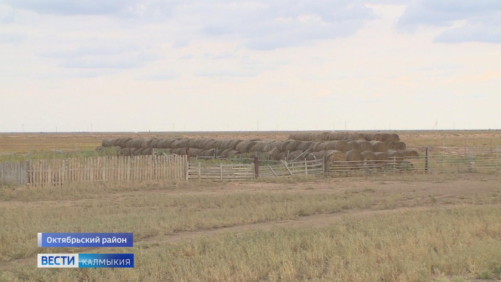 В хозяйствах Октябрьского района продолжается заготовка кормов