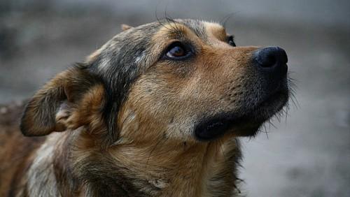 В Элисте появится приют для бездомных животных
