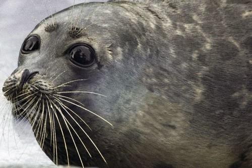 Сотрудники пограничного управления ФСБ по Калмыкии и Астраханской области спасли более 200 осетров и каспийского тюленя