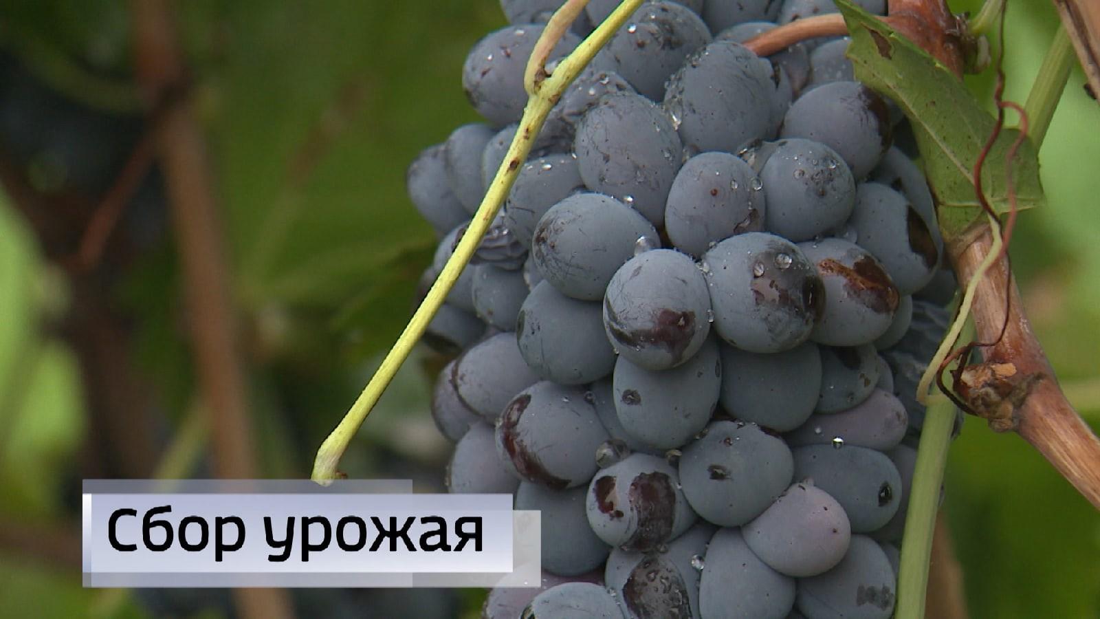 В Калмыкии завершается сезон сбора урожая с садовых и приусадебных участков