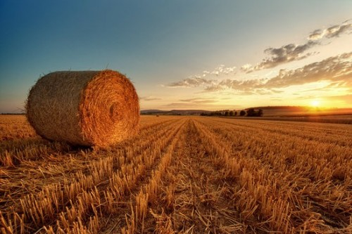 Обеспеченность грубыми кормами в хозяйствах Калмыкии составляет 83%