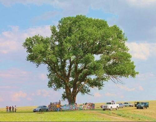 Одинокому тополю вручили свидетельство за участие в конкурсе «Европейское дерево года 2020»