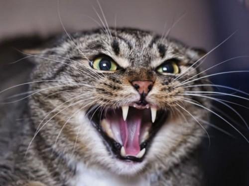 В поселке Бургсун, Кетченеровского района домашняя кошка укусила местную жительницу