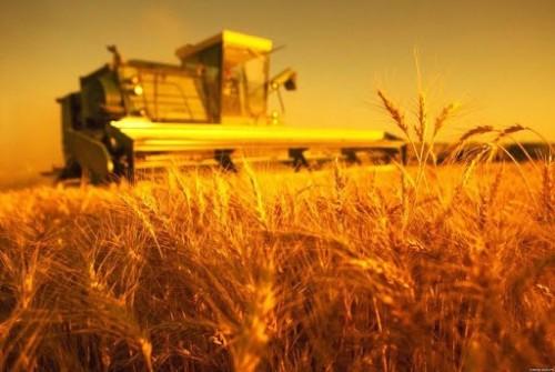 В Калмыкии реализуется федеральная программа «Создание системы поддержки фермеров и развитие сельской кооперации»