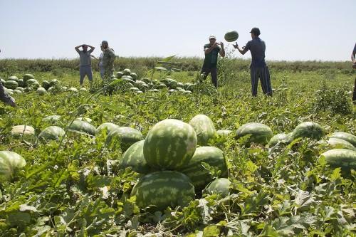 Засуха отразилась на качестве овощной продукции