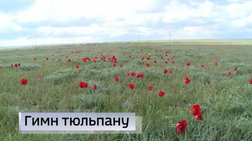 Главные символы степи уже появились в некоторых районах Калмыкии