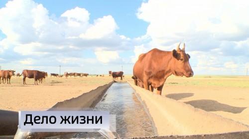 Сегодня в России профессиональный праздник фермеров