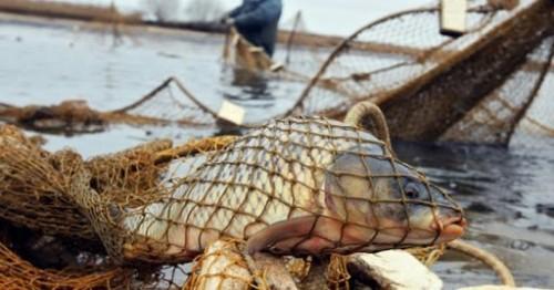 В Лаганском районе задержаны браконьеры