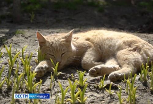 Во всем мире отметили День бродячих животных