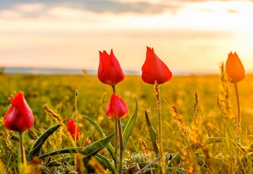 В программе Фестиваля тюльпанов много ярких мероприятий
