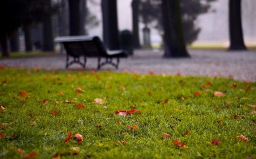 Открытие Парка отдыха и здоровья в Октябрьском районе с нетерпением ждут местные жители