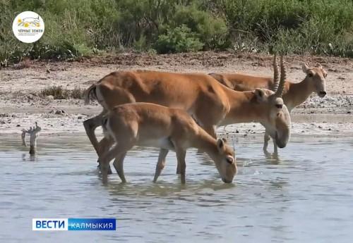 Уникальные животные степного края – снова в объективе фотокамер