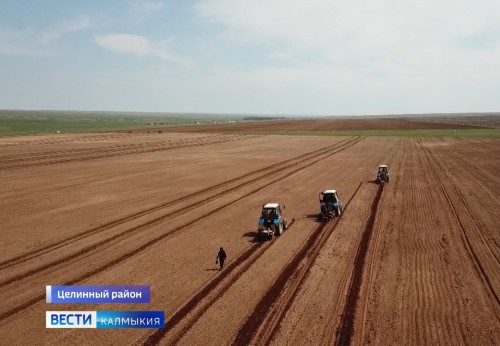 Значительные масштабы принимают в Калмыкии мероприятия по возрождению лесных насаждений