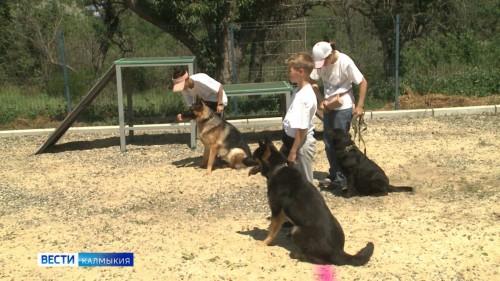 Маленькие кинологи показали, чему они научились на Курсах юных собаководов