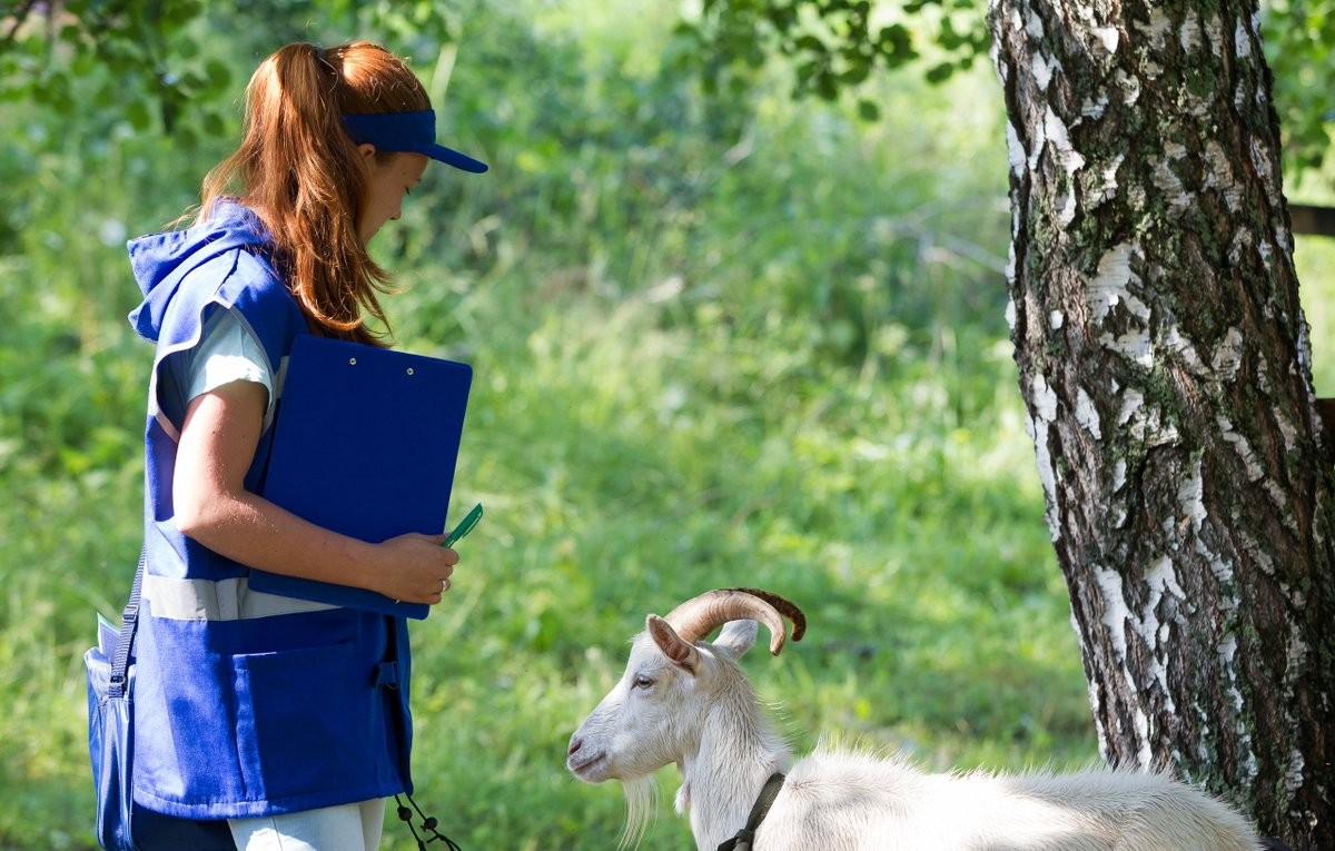 В Калмыкии подводят итоги сельскохозяйственной микропереписи
