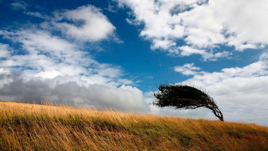 Потенциал ветра и солнца - в помощь калмыцким предпринимателям