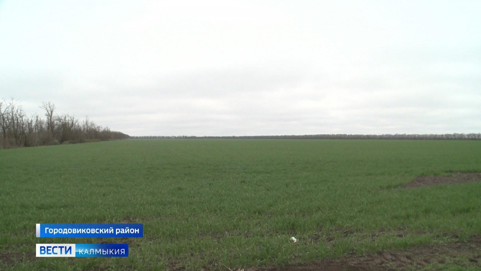 В хозяйствах Городовиковского района начались весенне-полевые работы