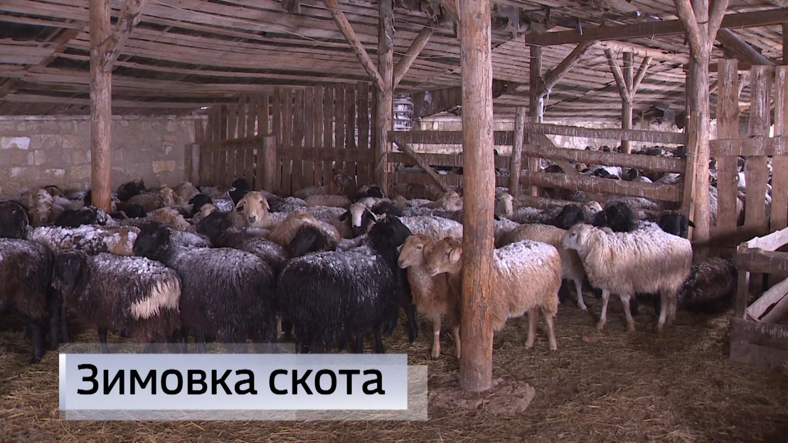 Зимовка в хозяйствах Целинного района проходит в штатном режиме