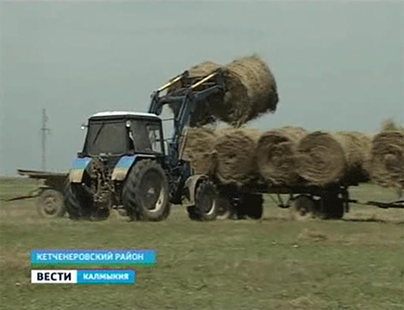 Калмыкия ведет заготовку кормов в соседних регионах
