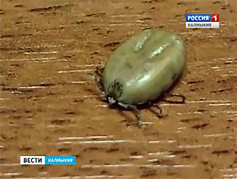 Прокуратура Кетченеровского района проверила соблюдение санитарно-эпидемиологических требований