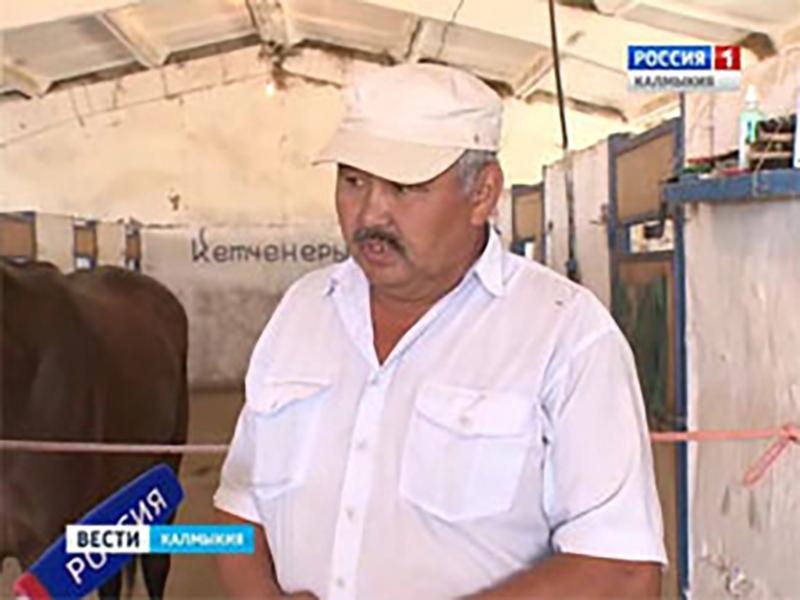 В Элисте пройдут конные соревнования на Кубок Главы Калмыкии