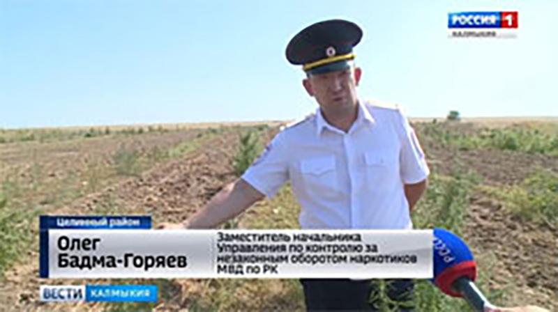 В регионе уничтожено более 3 тысяч кустов конопли