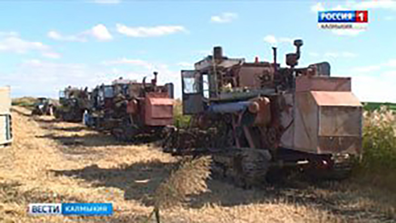 В Октябрьском районе Калмыкии завершается уборка риса