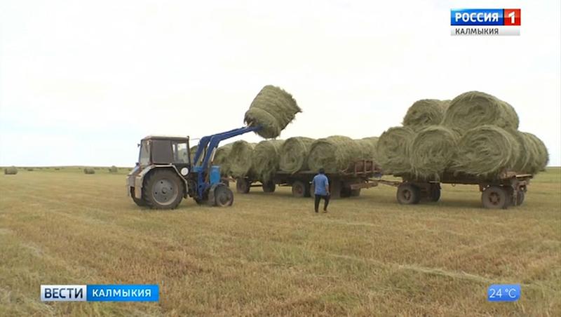 В Калмыкии кормозаготовка в самом разгаре